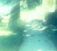 Glare from sunlight on sidewalk