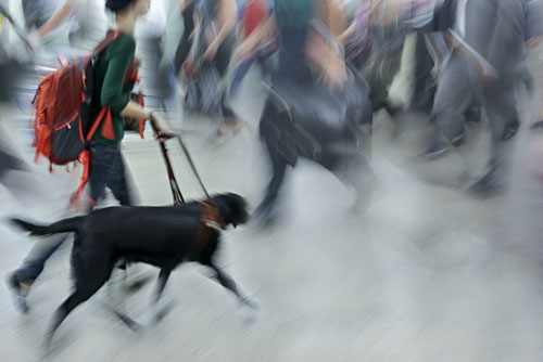 Person walking on the street with guide dog in motion blur.