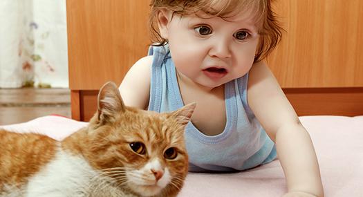 baby petting orange cat