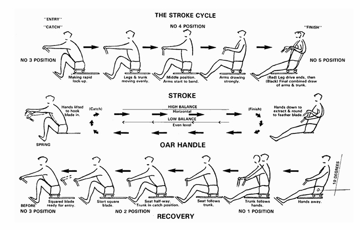 A diagram of the stroke cycle showing the different steps for rowing exercises