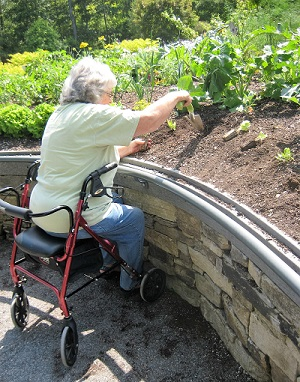 woman in wheelchair planting