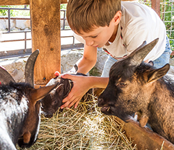 A boy bending over petting several farm animals