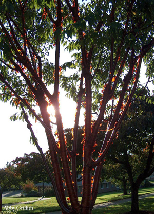 tree branches glowing in sun